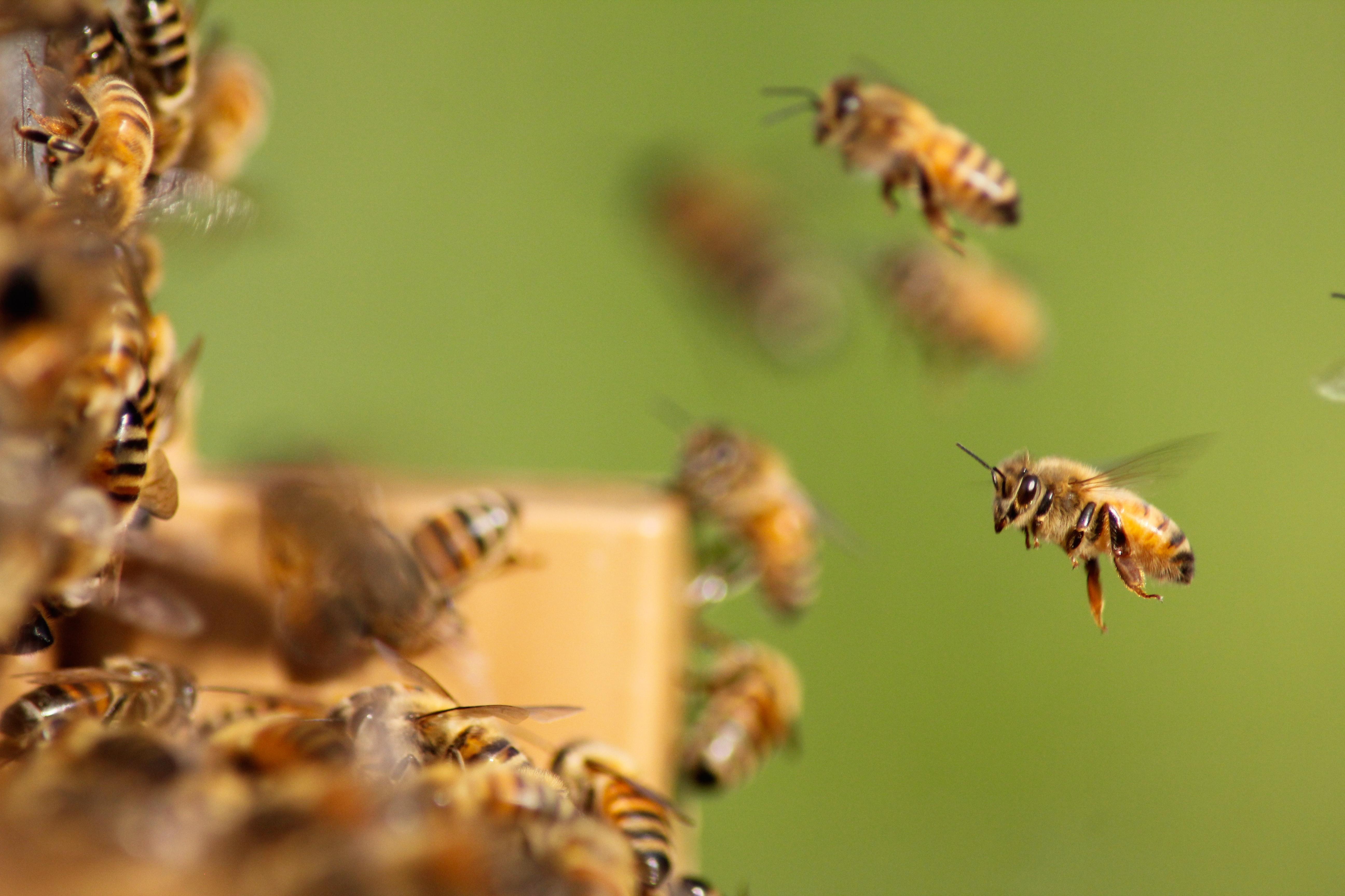 Természetes méhegészség Méhbarát Apidiár termékekkel